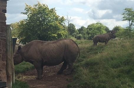 rhino-and-baby