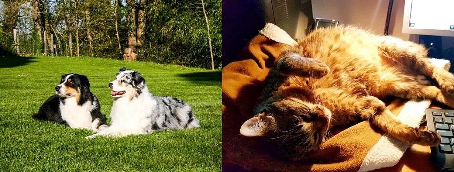 Beth Haslams pets